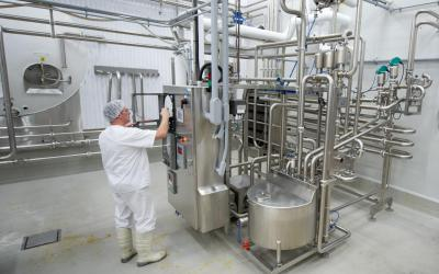 Milk is pasteurized to kill harmful bacteria,