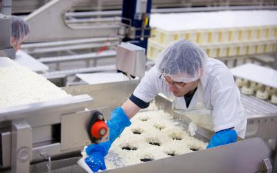 The curd is then placed in round molds,